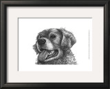Amber the Golden Retriever Print by Beth Thomas