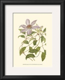 Blossoming Vine III Prints by Sydenham Teast Edwards