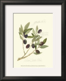 Gaeta Olives Posters by Elissa Della-piana