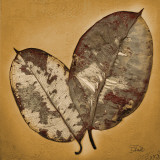 Beauty in Gold I Prints by Patricia Quintero-Pinto