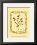 Thyme Art by Wendy Russell