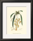 Elegant Orchid I Prints by Sydenham Teast Edwards
