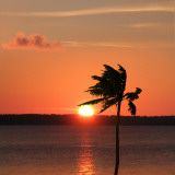 Sunset Palm Prints by Karol King