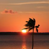 Sunset Palm Prints by Karol King