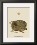 Antique Nest and Egg I Posters by Reverend Francis O. Morris