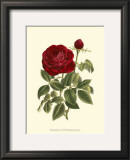 Magnificent Rose IV Art by Ludwig Van Houtte