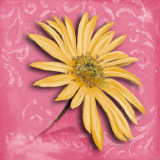 Blooming Daisy II Prints by Nelly Arenas