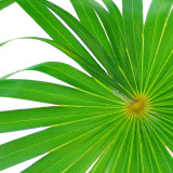 Exposed Palm I Posters by Karol King