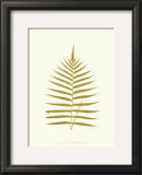 Lowes Fern IV Posters by Edward Lowe