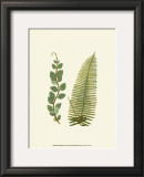 Woodland Ferns VI Prints by Edward Lowe