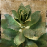 Succulent I Poster by Patricia Quintero-Pinto