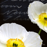Poppies Over Black I Poster by Patricia Quintero-Pinto