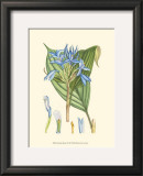 Periwinkle Blooms I Prints by Samuel Curtis