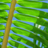Palm Collection I Prints by Karol King