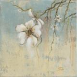 Cherry Blossom I Poster by Patricia Quintero-Pinto