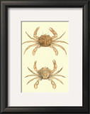 Antique Crab III Posters by James Sowerby
