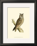 Long Eared Owl Poster by Reverend Francis O. Morris