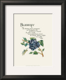 Blueberry Posters by G. Phillips