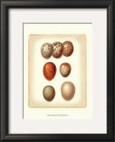 Bird Egg Study I Print