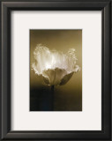 Tulip I Poster by Chris Sands