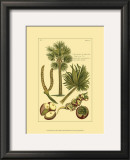 Printed Exotic Palm I Posters by Pierre-Joseph Buchoz