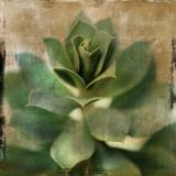 Succulent I Prints by Patricia Quintero-Pinto