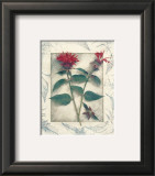 Bee Balm Prints by Julie Nightingale