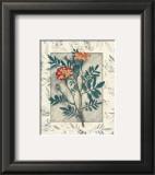 Calendula Poster by Julie Nightingale