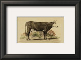 Antique Cow IV Prints by Julian Bien