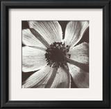 Anemone I Print by Graeme Harris