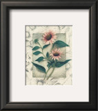 Echinacea Prints by Julie Nightingale