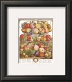Twelve Months of Fruits, 1732, September Prints by Robert Furber