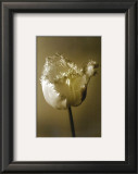Tulip II Prints by Chris Sands
