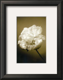 Peony II Prints by Chris Sands