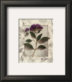 Heliotrope Art by Julie Nightingale