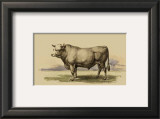 Antique Cow I Print by Julian Bien
