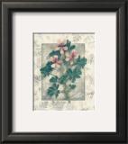 Pelargonium Prints by Julie Nightingale