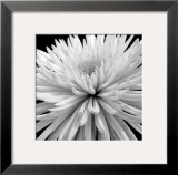 Mum Prints by Darlene Shiels