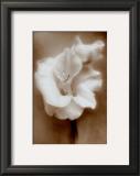 Gladiolus Prints by Christine Zalewski