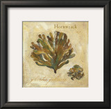 Hornwrack Prints by Jillian David