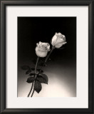 Roses Prints by Dick & Diane Stefanich
