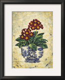 Primula Auricula Posters by Richard Henson