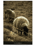 Sheep May Saftly Graze Affiches par Graham Rhodes