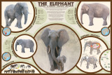 The Elephant, Poster
