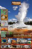 Yellowstone Milli Parkı - Reprodüksiyon