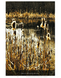 Down in the Reeds by the River Poster by Graham Rhodes