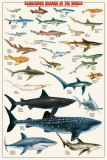 Dangerous Sharks Prints