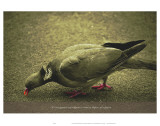 Its Not Against Any Religion to Want to Dipose of the Pigeon Prints by Graham Rhodes