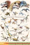 Fjærkledde dinosaurer II Bilder