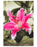 Give Me Lillies in Armfuls Prints by Graham Rhodes